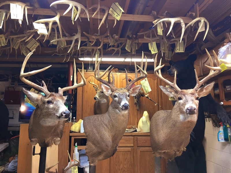 Dew River Taxidermy